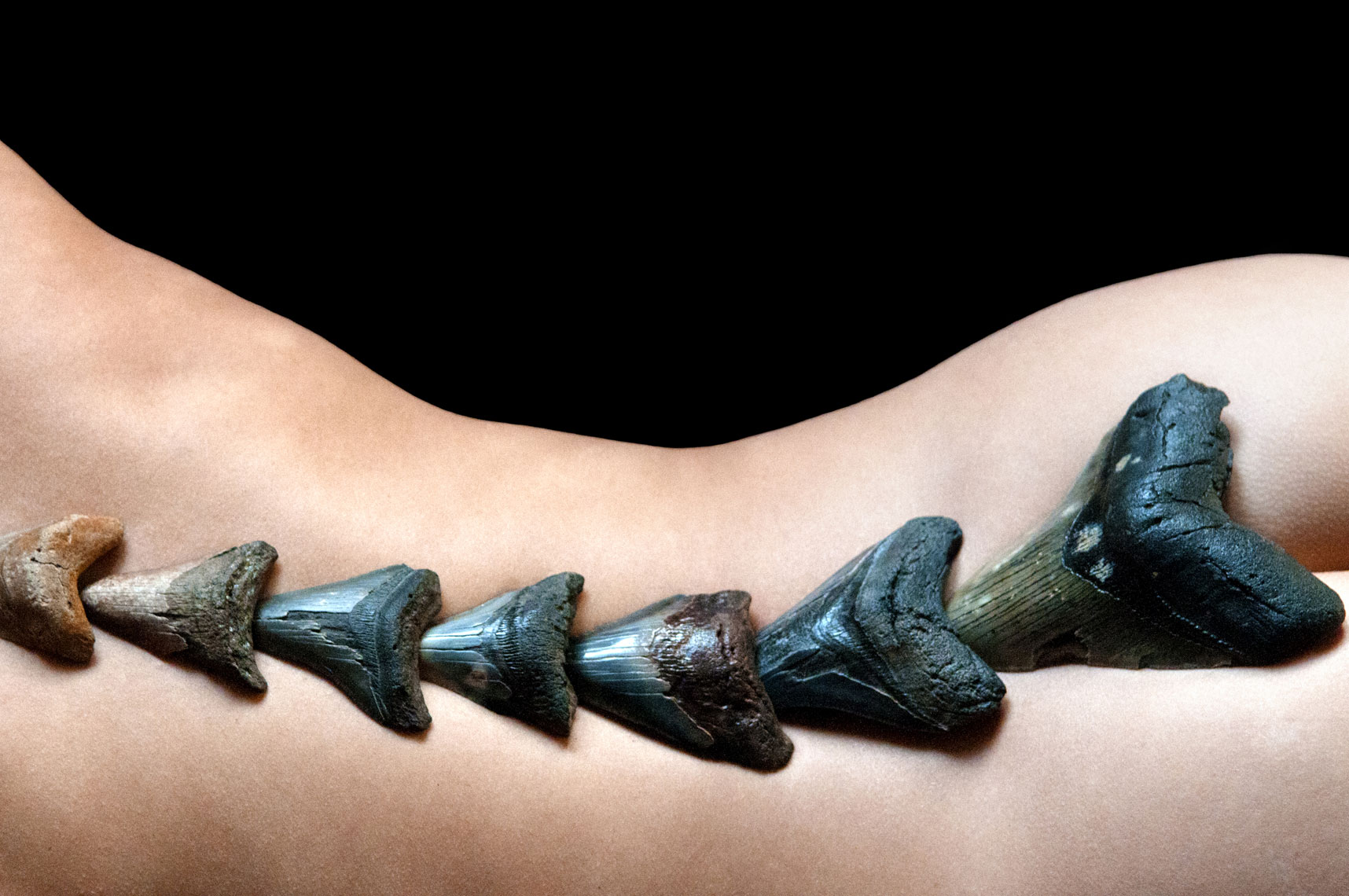 megalodon-fossil-giant-shark-teeth-on-female-spine