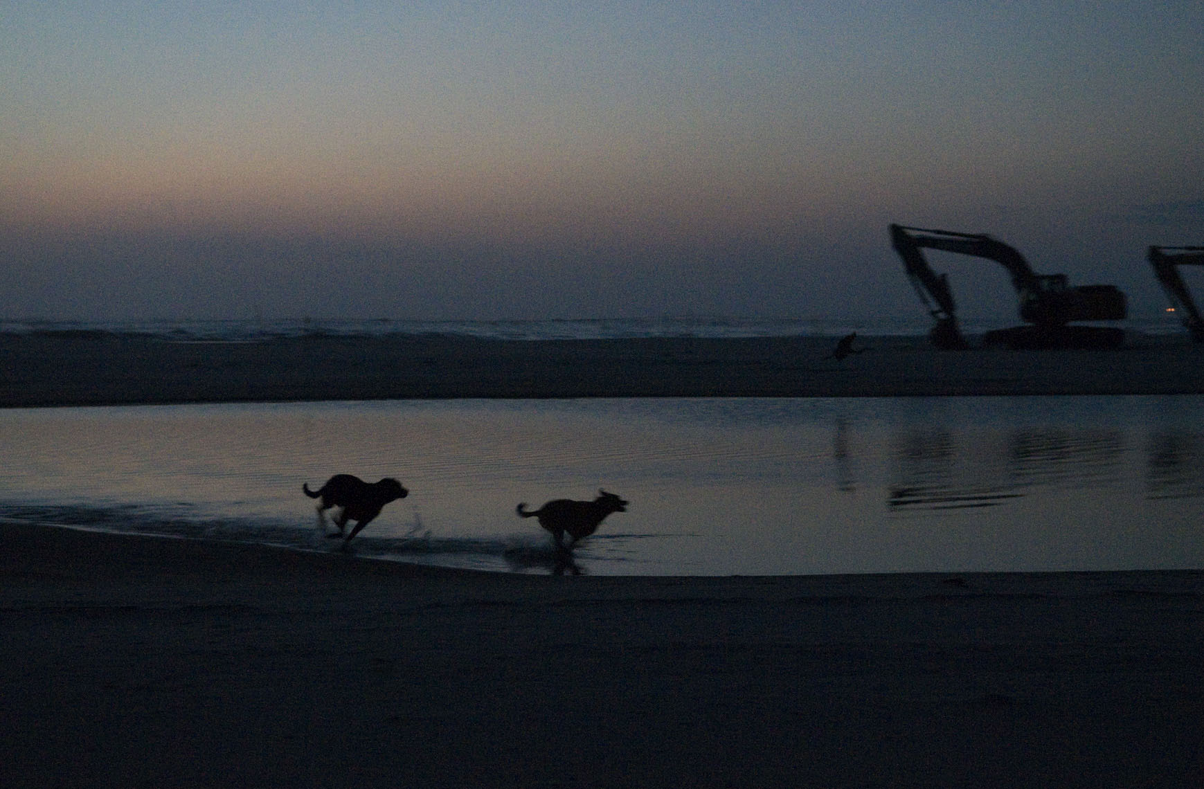 silhouettes-of-happy-dogs-running-on-dauphin-island-alabama